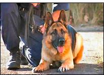 perro policia - ¡¡Un gran trabajo, chicos…!!