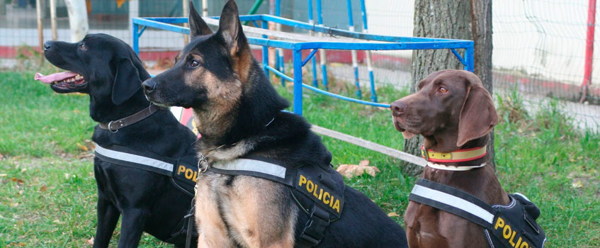 perros policia - ¡¡Un gran trabajo, chicos…!!