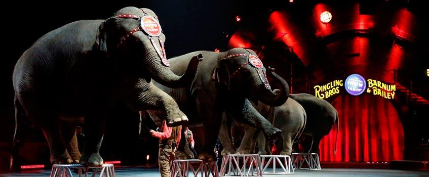 circo ringling - Circo Ringling: Un circo procesado por maltrato actuará en España