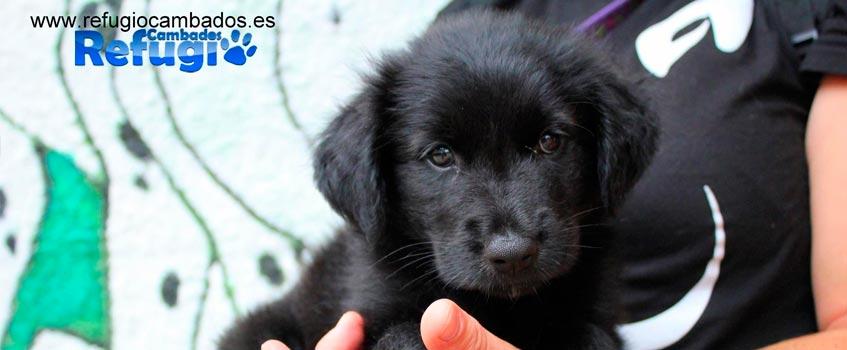 refugio cambados 1 - Cambados: 11 años ofreciendo un hogar a perros abandonados