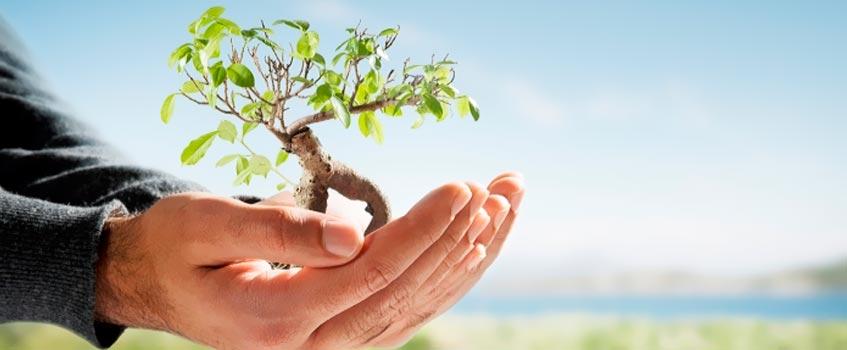 dia arbol 1 - Día del árbol: Un día más para recordar al pulmón del Planeta