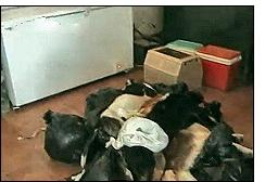 elrefugio juicio cadiz - Protección Animal: El primer juicio contra una perrera será en Cádiz