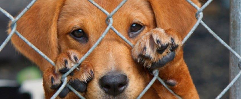perro - Protección Animal: El primer juicio contra una perrera será en Cádiz