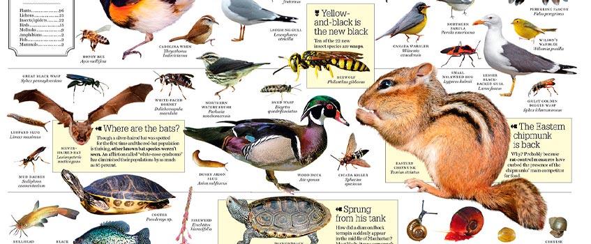 especies animales - El planeta Tierra posee 8,7 millones de especies animales